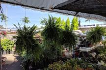 Mega Comercial Mexicana, Bucerias, Mexico