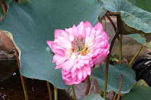 Guangxi Medicinal Botanical Garden, Nanning, China