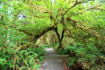 Hoh River Trail, Olympic National Park, United States
