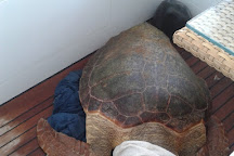 Sea Turtle Rescue Centre, Glyfada, Greece