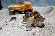 Yokohama Omoshiro Aquarium, Yokohama, Japan