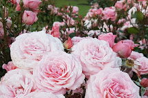 Dugald MacKenzie rose breeding centre, Palmerston North, New Zealand