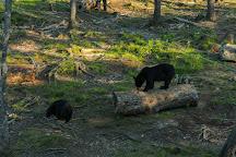 Little, Big Bear Safari, Acadieville, Canada
