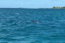 Spearfishing Puerto Rico, Fajardo, Puerto Rico