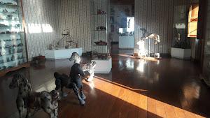 Museo Galeria De Arte 3