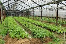 HKFYG Organic Farm, Hong Kong, China