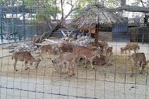 Dubai Zoo, Dubai, United Arab Emirates