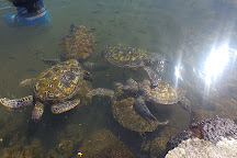 Swimming with Turtles, Savai'i, Samoa