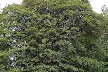 Meikleour Beech Hedge, Meikleour, United Kingdom