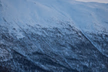 Wandering Owl, Tromso, Norway