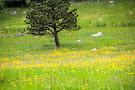 Colorado Chautauqua: Park