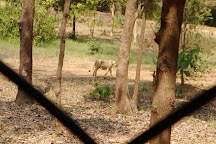 Silvassa Vasona Lion Safari, Silvassa, India