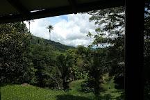 Las Cruces Biological Station and Wilson Botanical Garden, San Vito, Costa Rica