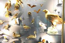 Naturkundemuseum, Erfurt, Germany