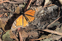 Monarch Butterfly Grove, Pismo Beach, United States