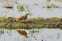 Kadalundi Bird Sanctuary, Kozhikode, India