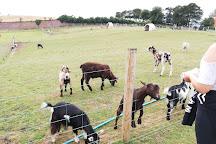Mount Panther Farm Park, Clough, United Kingdom