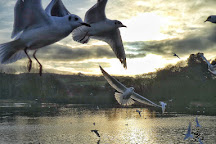Kiltonga Nature Reserve, Newtownards, United Kingdom