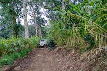 Cardamom Hills, Kerala, India