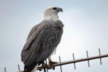 Melbourne Birding Tours, Melbourne, Australia