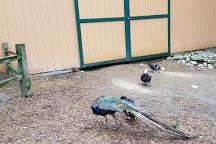 GarLyn Zoological Park, Naubinway, United States