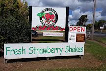 The Super Strawberry, Glen Innes, Australia
