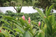 Doka Estate Coffee Tour, Poas Volcano National Park, Costa Rica