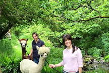 Waterfall Alpaca Farm, Drimoleague, Ireland