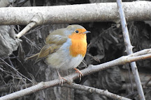 Parndon Wood Nature Reserve, Harlow, United Kingdom