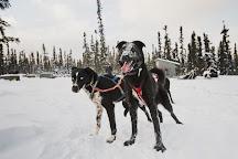 Black Spruce Dog Sledding, Fairbanks, United States