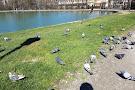 Parco Ducale