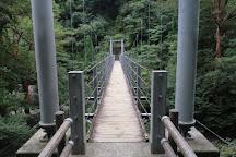 Jōmon Sugi, Yakushima-cho, Japan