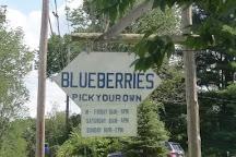 Bastiani's Blueberry Farm, Hebron, United States