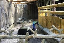 Avilon Zoo, Rodriguez, Philippines
