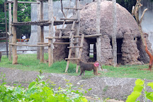 Nandankanan Zoological Park, Bhubaneswar, India