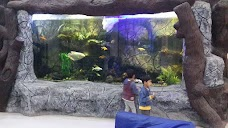 Clifton Fish Aquarium (ڪلفٽن فش ايڪواريم) karachi