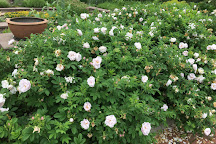 Rudolf W. Van der Goot Rose Garden, Somerset, United States