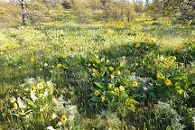 Sorosis Park, The Dalles, United States