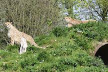 Dartmoor Zoological Park, Sparkwell, United Kingdom