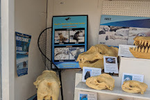 Pacific Marine Mammal Center, Laguna Beach, United States