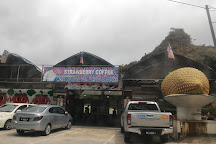 Kok Lim Strawberry Farm, Brinchang, Malaysia