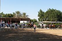 European Equestrian Center Dubai, Dubai, United Arab Emirates
