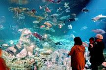 Vancouver Aquarium, Vancouver, Canada