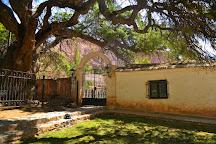 Algarrobo Historico, Purmamarca, Argentina