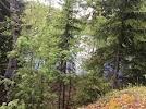 """Вулкан. Карелия. Сортавала. Природный парк """"Ристиярви"""" на фото Сортавалы"""