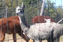Home Again Alpaca Farm, Theresa, United States