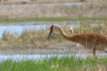 Crex Meadows Wildlife Area, Grantsburg, United States