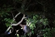 Monteverde Night Walk Costa Rica, Monteverde Cloud Forest Reserve, Costa Rica
