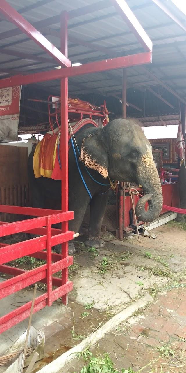 Ayutthaya elephant riding