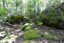 Rural Rootz Nature Reserve, Wiarton, Canada